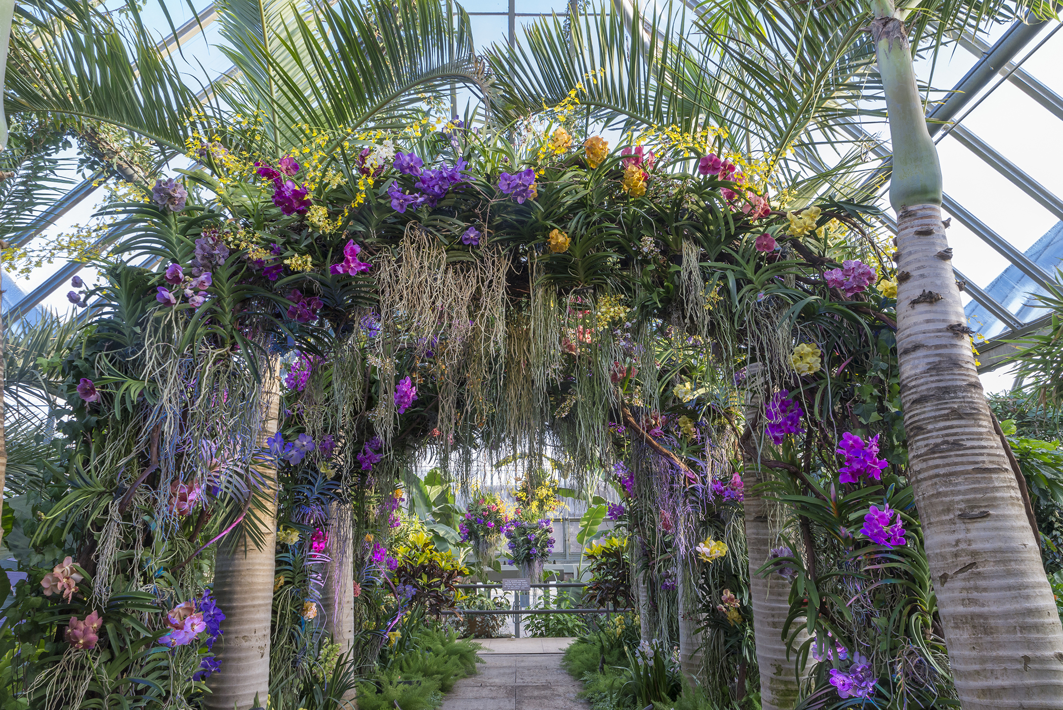 Botanic Garden Orchid Garden Ftempo