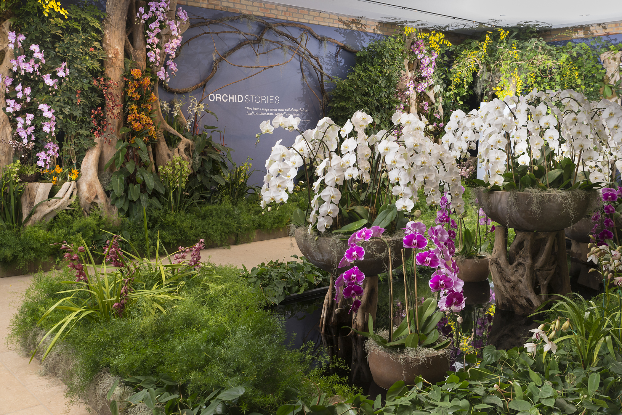 Bon ... Asia In Bloom: The Orchid Show At The Chicago Botanic Garden