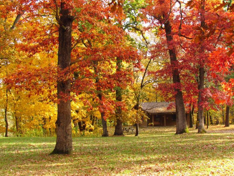 Kishauwau Country Cabins Enjoy Illinois