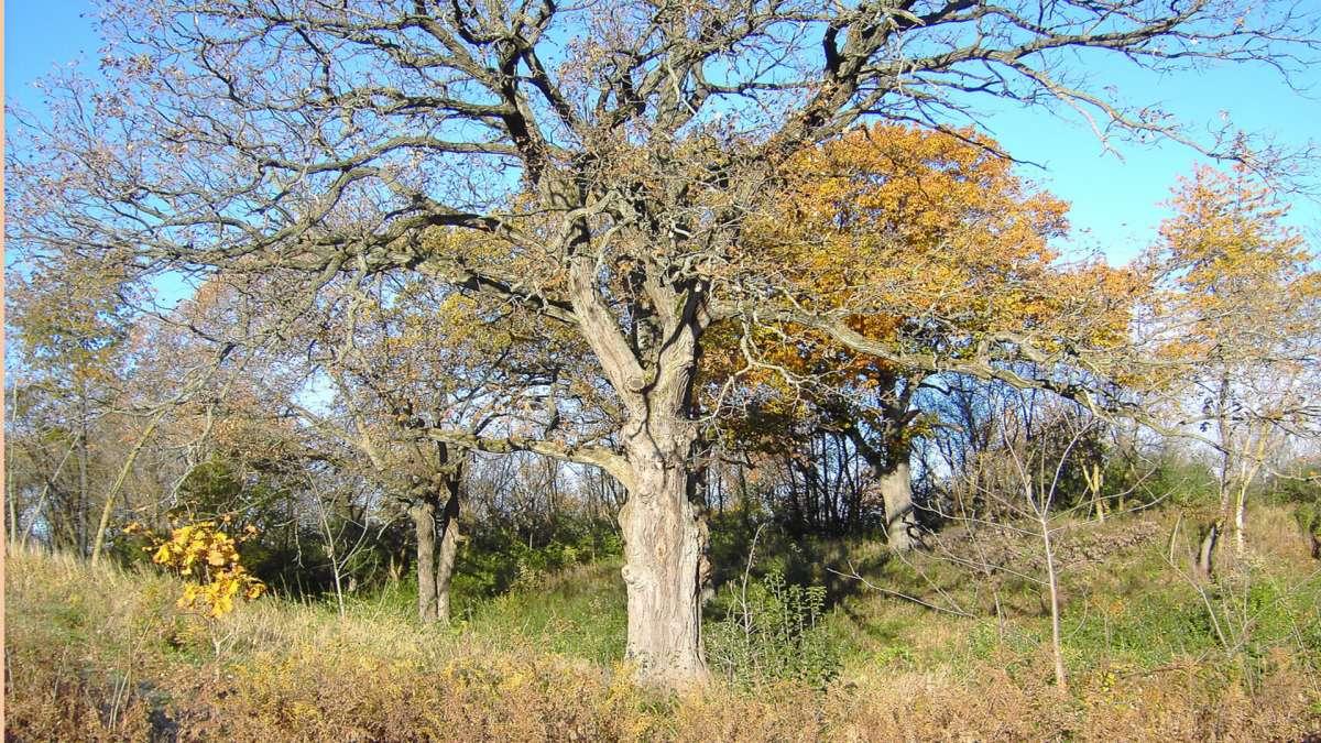 Blackwell Forest Preserve Enjoy Illinois