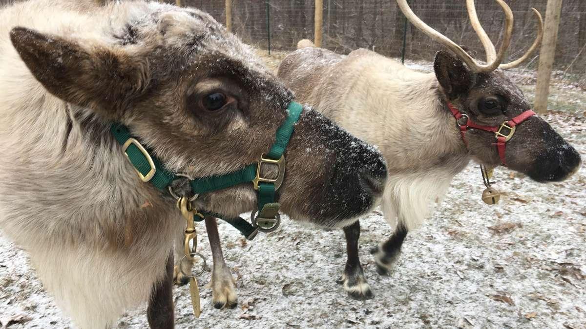 Snowman S Reindeer Farm Enjoy Illinois