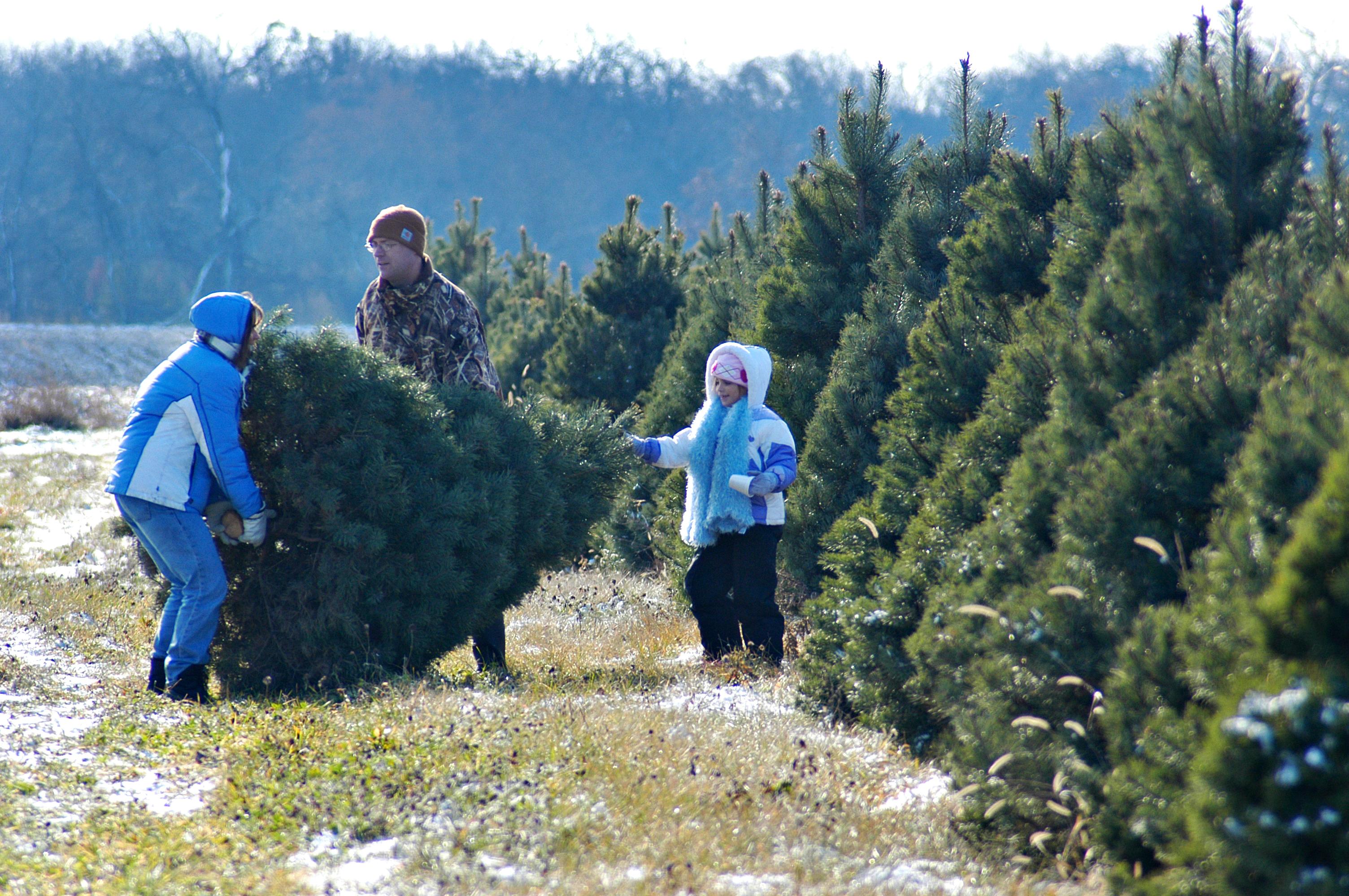 Richardson Christmas Tree Farm Enjoy Illinois