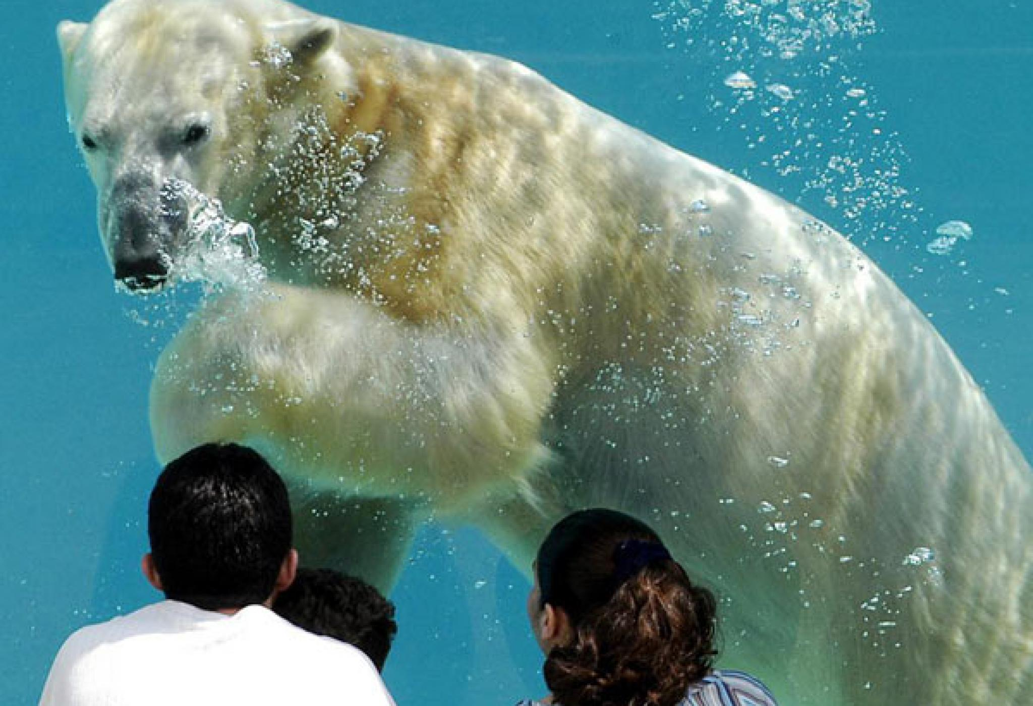 Wild Encounters Polar Bear Waiting For the Ice Details
