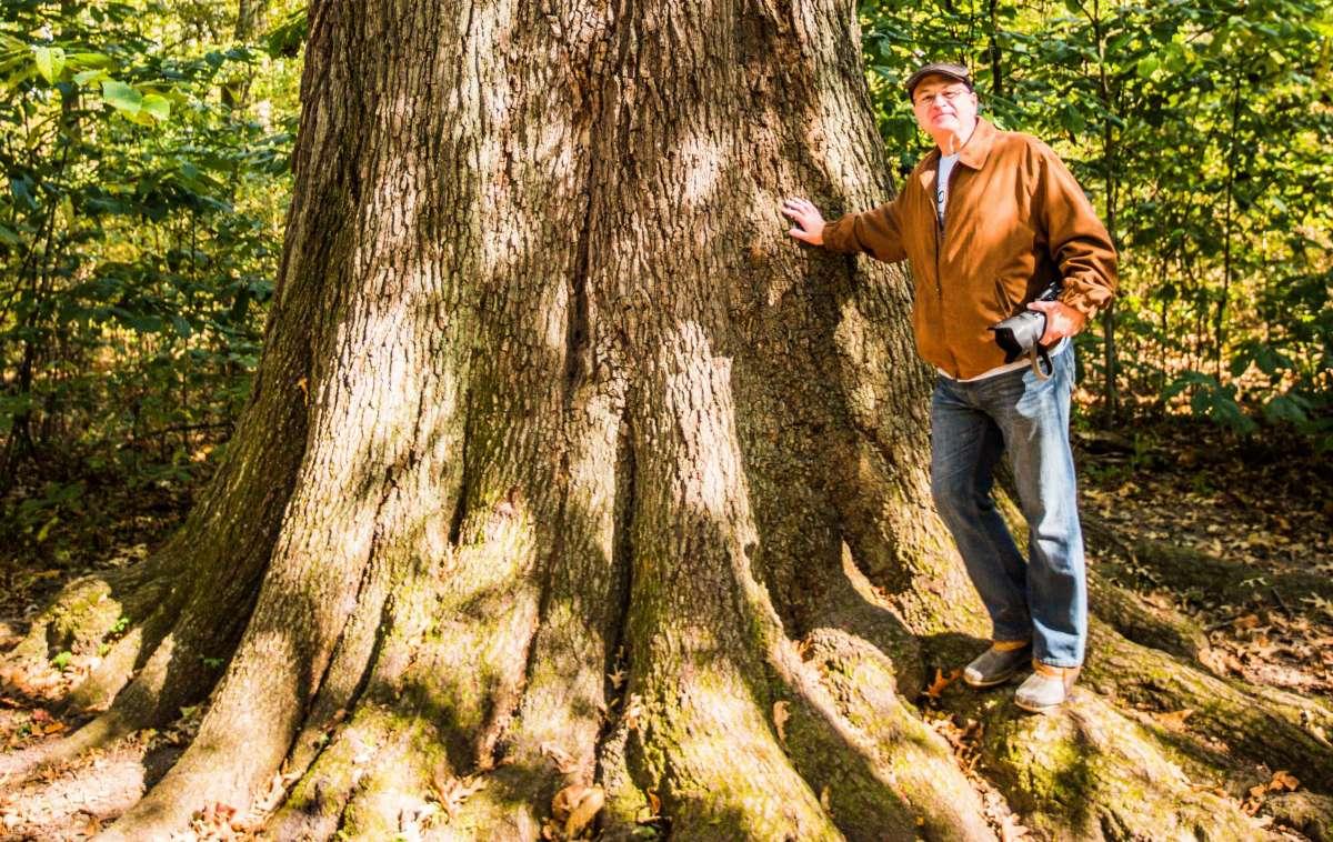 Stand beside the state champion Cherry bark oak tree