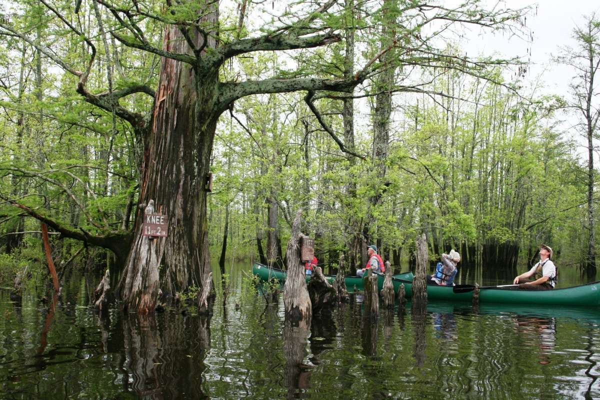 Plan A Road Trip >> Cache River Wetlands – Illinois' Hidden Bayou