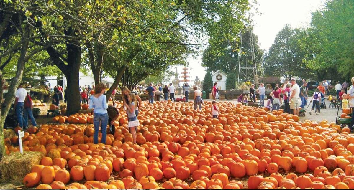 The Great Pumpkin Patch In Arthur Illinois