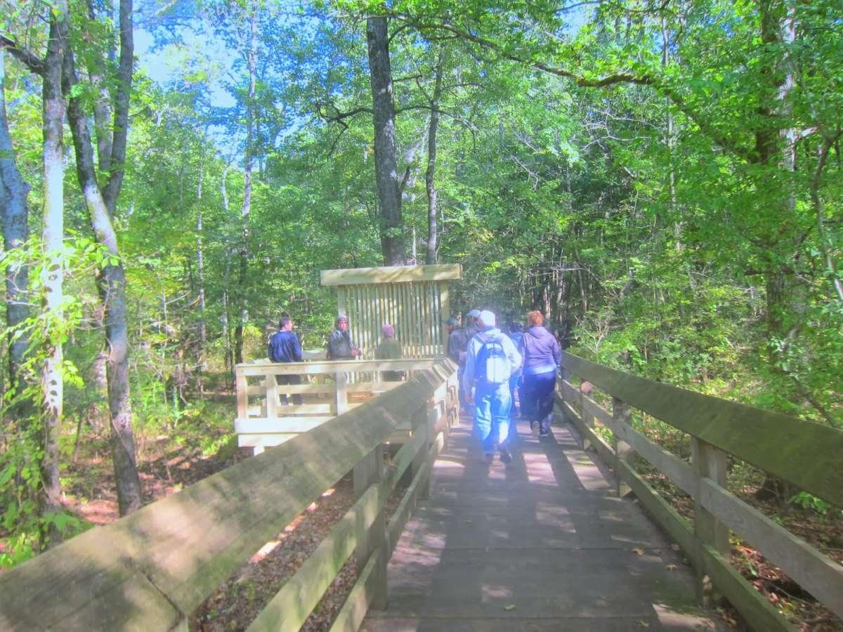 Enjoy a stroll on Section 8 woods 450 foot accessible boardwalk